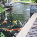 koi pond design malaysia , 7 Fabulous Koi Fish Fountain In pisces Category