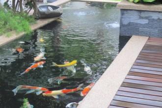 Koi Pond Design Malaysia , 7 Fabulous Koi Fish Fountain In pisces Category