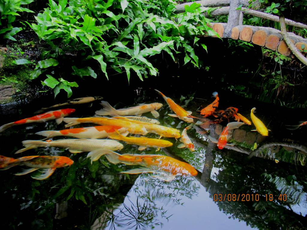 Koi pond filter design 8 charming koi fish ponds designs for Koi fish net