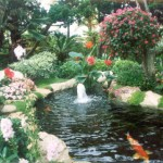 koi pond filter general , 8 Cool How To Care For Koi Fish Pond In pisces Category