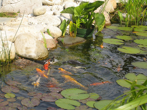 Водоем на даче для разведения рыбы