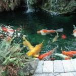 maintaining fountains , 7 Fabulous Koi Fish Fountain In pisces Category