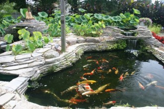michigan koi in Biome