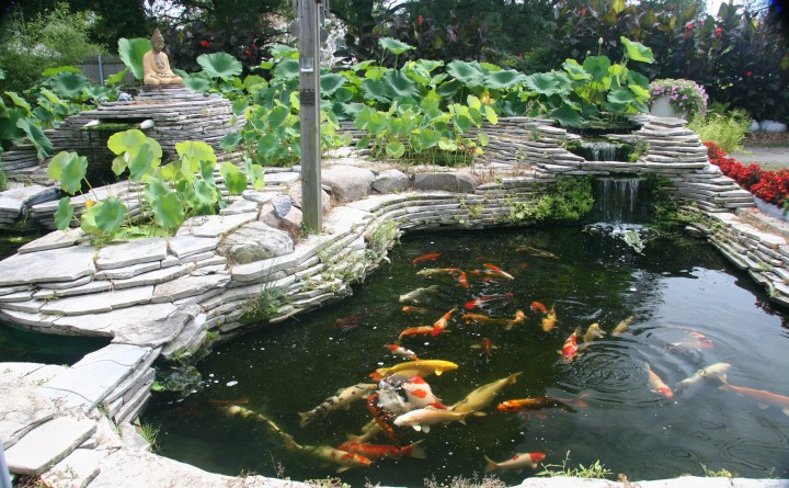 Michigan koi 7 nice koi fish pond supplies biological for Garden pond supplies