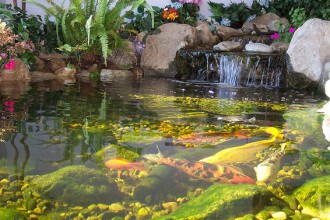Pond Fishing , 8 Cool How To Care For Koi Fish Pond In pisces Category