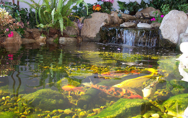 Pond Fishing 8 Cool How To Care For Koi Fish Pond Biological Science Picture Directory