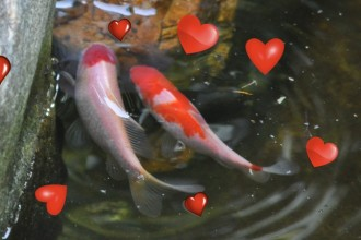 romantic fish in pisces