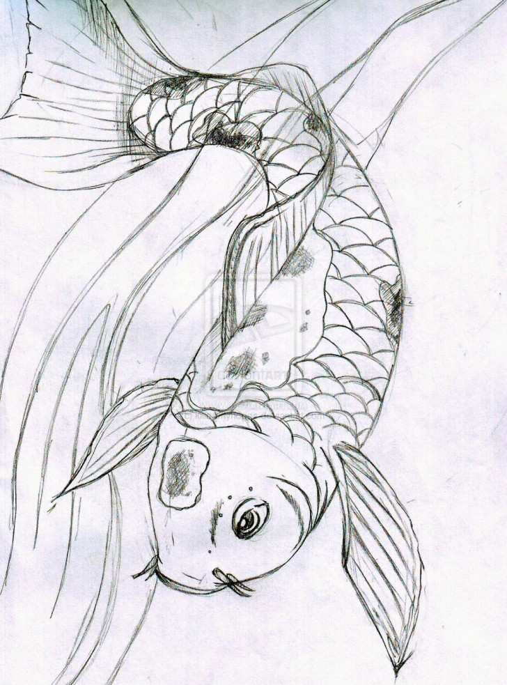 Sketch koi fish 8 good koi fish drawings biological for Koi fish sketch
