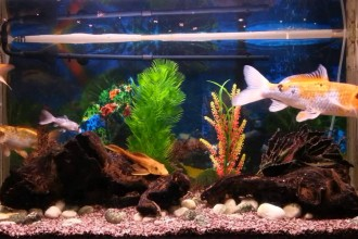Tropical Fish , 8 Wonderful Koi Fish Tanks In pisces Category