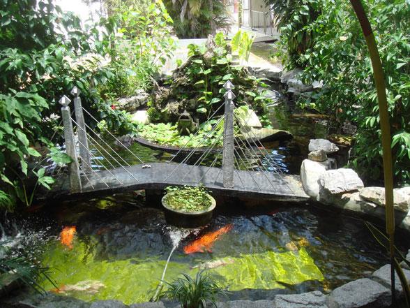 pisces , 6 Nice Koi Fish Pond Kits : Koi Fish Pond