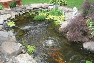 Koi Pond Aeration in Animal