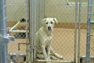 Adopting From The Animal Shelter in Dog