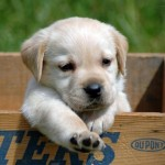 Beautiful Small Dogs Breeds , 5 Hottest Small Dog Breeds And Pictures In Dog Category