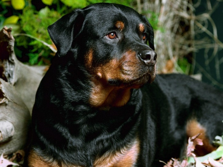 Dog , 5 Ultimate Free Pictures Of Dogs : Big Dog