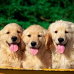 Cute Dogs , 8 Popular Names And Pictures Of Dogs In Dog Category