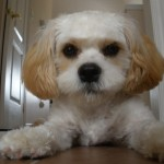 Cute Puppy  , 5 Cute Dog Pictures Contest In Dog Category