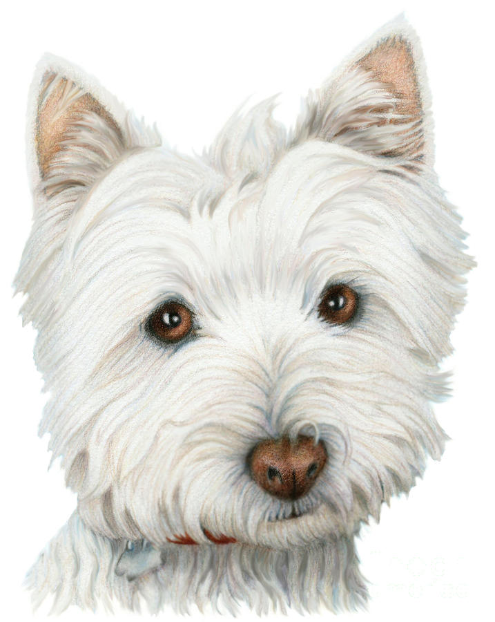Dog , 7 Amazing Art Pictures Of Dogs : Cute Westie Dog Art Digital Art