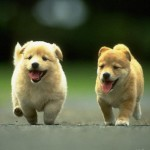 Cute puppies , 7 Stunning Pictures Of Dogs And Puppys In Dog Category
