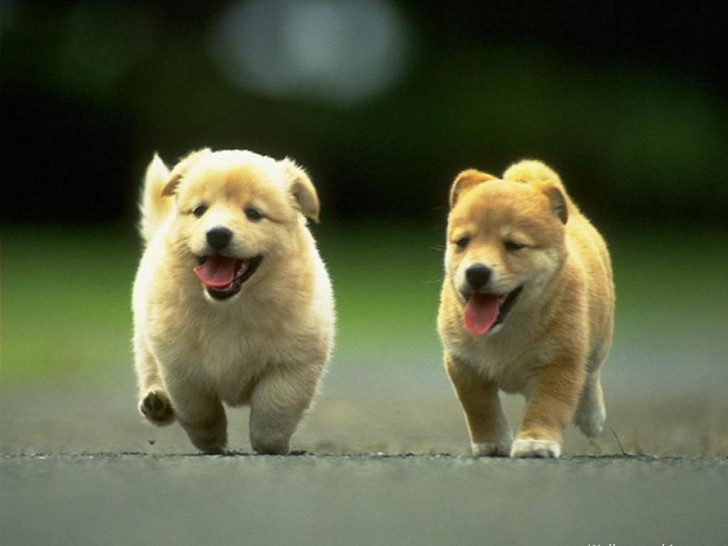 Dog , 7 Stunning Pictures Of Dogs And Puppys : Cute Puppies