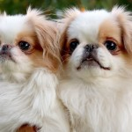 Cute puppy picture contest , 5 Cute Dog Pictures Contest In Dog Category