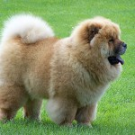 Dangerous Dog Breeds , 7 Stunning Pictures Of Dogs Breeds In Dog Category