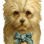 Darling Dog with Bow , 7 Amazing Art Pictures Of Dogs In Dog Category