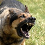 Description Military dog barking , 6 Unique Military Dog Pictures In Dog Category