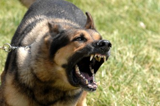 Description Military dog barking in pisces