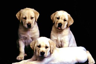Dog Adoption , 7 Superb Dog Adoption Pictures In Dog Category
