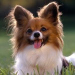 Dog Images Wallpaper , 6 Lovely Free Dog Pictures In Dog Category