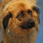 Dog Pound , 6 Excellent Dogs For Adoption Pictures In Dog Category