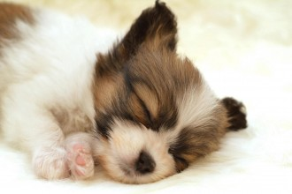 Dog Sleep Animals , 7 Gorgeous Dog Pictures Free In Dog Category