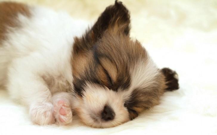 Dog , 7 Gorgeous Dog Pictures Free : Dog Sleep Animals