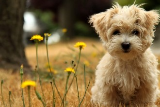 Dog Wallpapers in Butterfly
