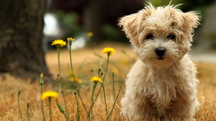 Dog , 5 Ultimate Free Pictures Of Dogs : Dog Wallpapers