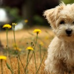 Dog Wallpapers , 7 Gorgeous Dog Pictures Free In Dog Category