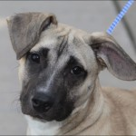Dogs for Adoption , 7 Superb Pictures Of Dogs For Adoption In Dog Category