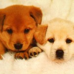 Dogs my puppies , 7 Stunning Pictures Of Dogs And Puppys In Dog Category