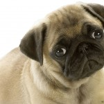 Dogs soo cute , 7 Top Picture On Dog In Dog Category