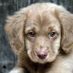 Dogs8 Most Beautiful , 5 Hottest Small Dog Breeds And Pictures In Dog Category