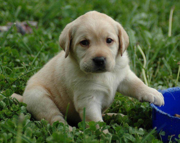 Dog , 8 Popular Names And Pictures Of Dogs : Fascinatingly Kids