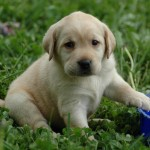 Fascinatingly kids , 6 Stunning Pictures Of Dogs In Dog Category