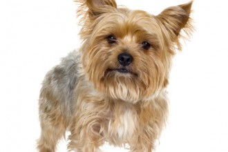 Find Out Information , 7 Amazing Dog Breeds With Pictures In Dog Category