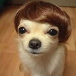 Hilarious Dog Haircut , 6 Amazing Pictures Of Dog Haircuts In Dog Category