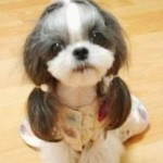Hilarious Dog Haircuts , 6 Amazing Pictures Of Dog Haircuts In Dog Category