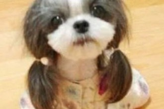 Hilarious Dog Haircuts in Butterfly