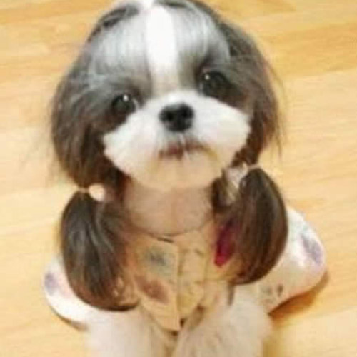 Hilarious Dog Haircuts