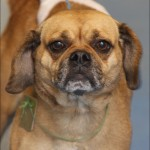 Lucas County Dogs , 7 Superb Pictures Of Dogs For Adoption In Dog Category