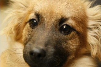 Lucas County Dogs For Adoptions , 7 Superb Dog Adoption Pictures In Dog Category