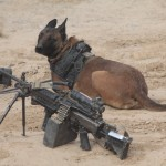 Military Working Dog , 6 Unique Military Dog Pictures In Dog Category